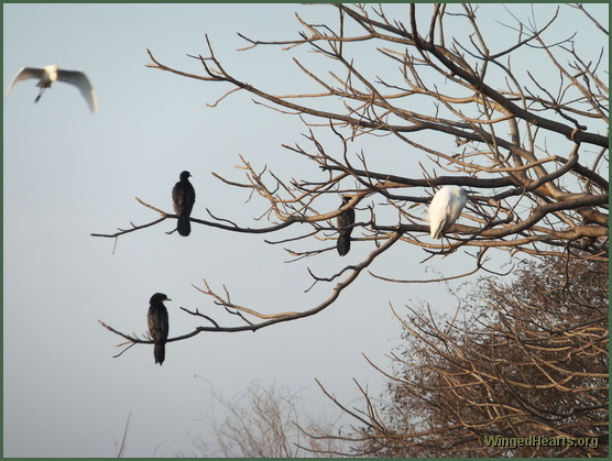 water birds at Ranthambore